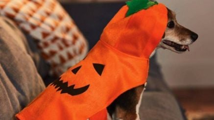 Costumi Halloween 2019 Lidl.Lidl Are Selling Halloween Costumes For Dogs Collegetimes Com