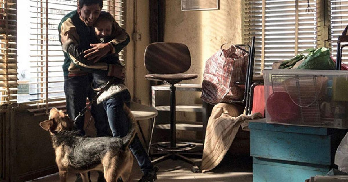 Dogman (2019) - Rotten Tomatoes