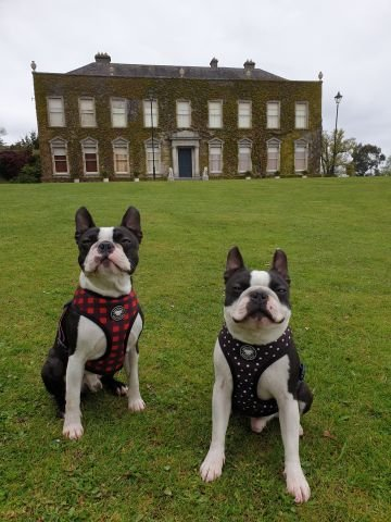 Henry and George chillin outside Cabinteely House last weekend...lucky to have that park in our 2km radius. By James W