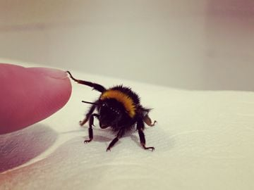 A bee-autiful inter-species relationship formed after a bathtub rescue mission. By Brendan C