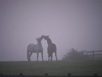 Taken in Carrigaline, Co. Cork.  'Social distancing?'  By Martin L