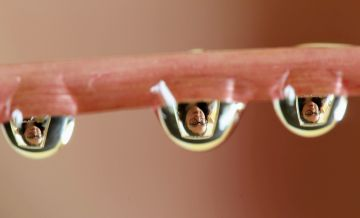 Taken in Laois.  I am trying to improve my photography skills so I decided to try out some water droplet photography. I had photographed flowers in the drop and wondered if I used a mirror could I get my reflection in the drop.  ByCLaire D.