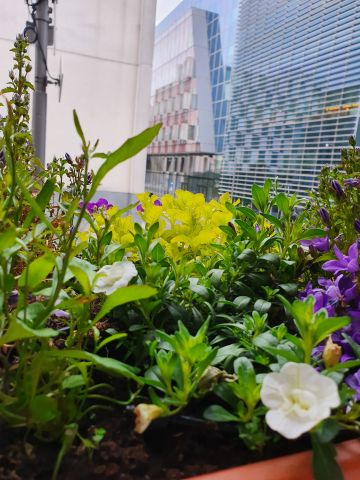 """Taken in Dublin.  'Dublin Docklands and its iconic buildings are taken over by my #DocklandsMiniGarden  Gardening is one of the best lockdown activity even with small spaces.""""  ByKasia C."""