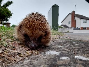 Taken in Trim, Co. Meath.  'We caught Sonic out for his daily 5 km yesterday..'  By Leeann H.