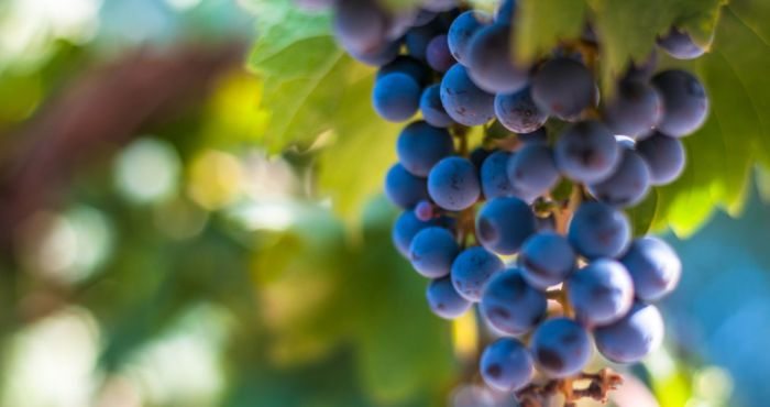 Lvmh Looking To Expand Argentinian Wine Brand Esm Magazine