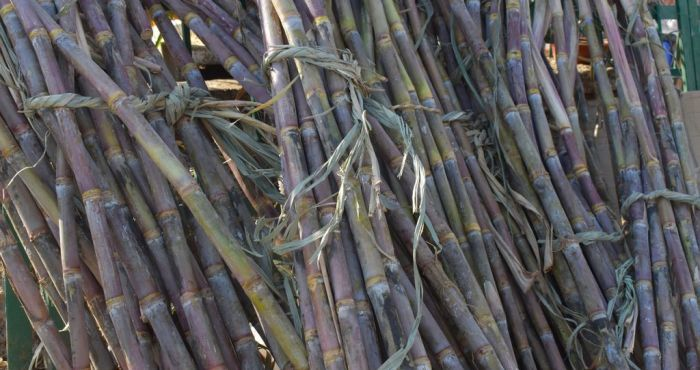 Brazil Mills Likely To Delay Cane Harvest Due To Weather