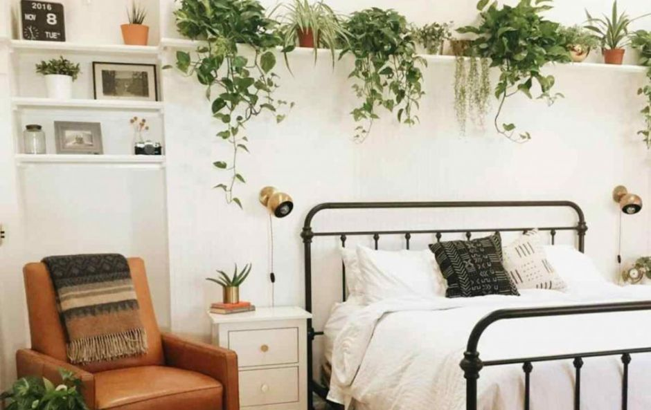 3 'bedroom plants' that will help you sleep better at night
