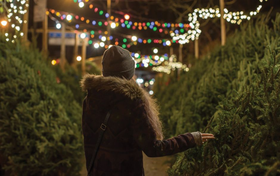 Everything you need to know about buying an ethical Christmas tree