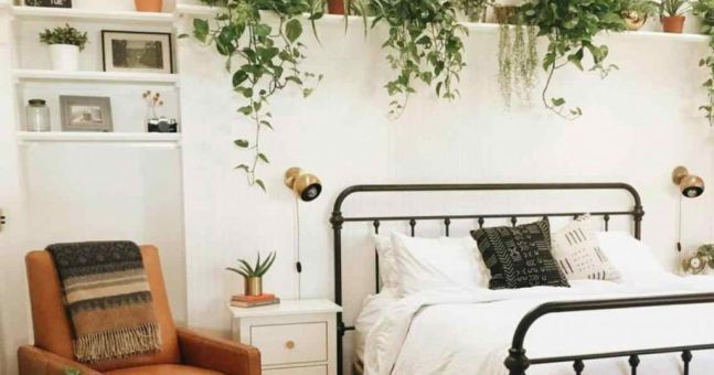 3 Bedroom Plants That Will Help You Sleep Better At Night