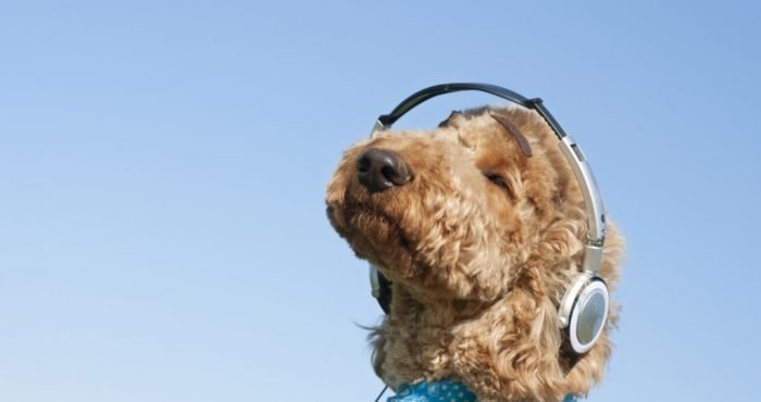 Spotify release special podcast which praises your dog when you're not home | The Irish Post