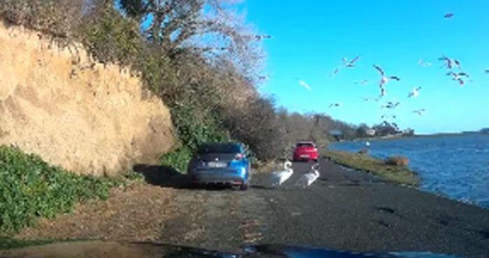 Heartless Dublin motorist captured ploughing car into flock of swans