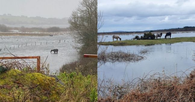 Numerous horses and ponies abandoned amid devastating flooding