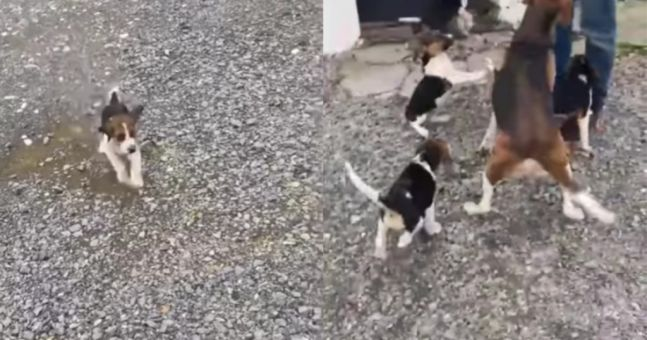 WATCH: Heartwarming moment stolen puppies are reunited with mother