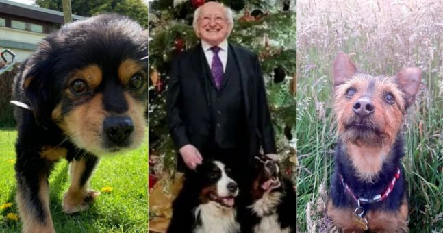 People of Ireland pay heartwarming tribute to President Michael D Higgins' beloved dog Síoda