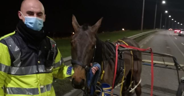 Gardaí seize pony and sulkie after dangerous driver 'flees through the fields' to escape arrest