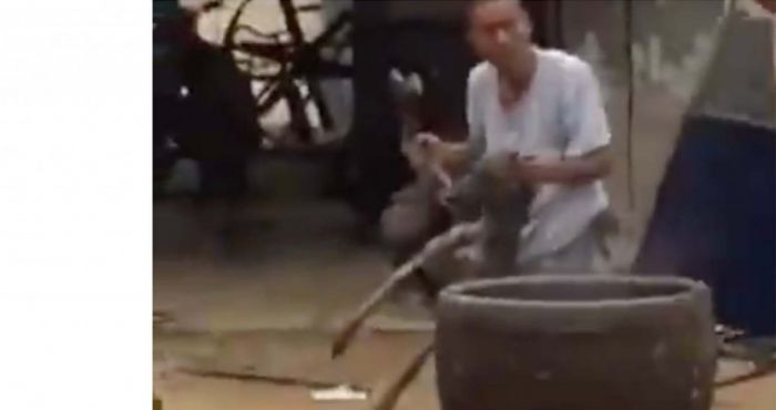 Horrifying footage of a greyhound being boiled alive in