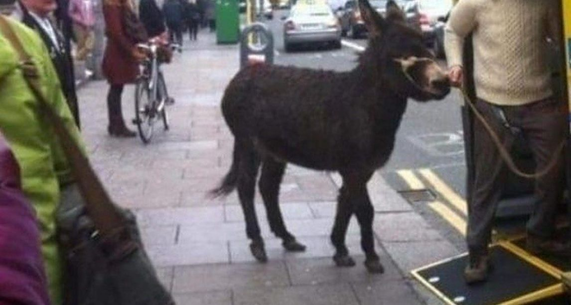 Picture of donkey boarding Dublin bus surfaces online