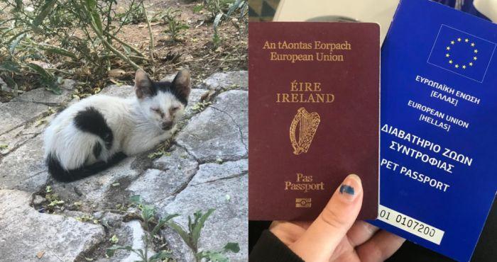 Irish woman brings sick Athens street kitten to Ireland to recover