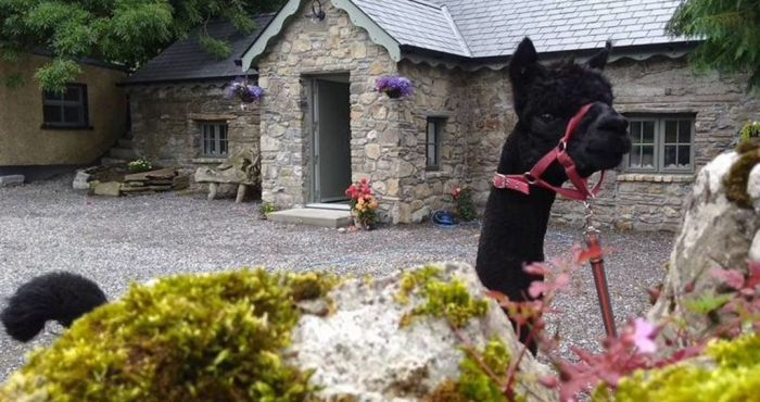 This Irish Airbnb is on an Alpaca Farm in the Slieve Bloom Mountains