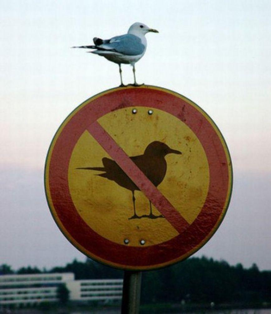 bird-III