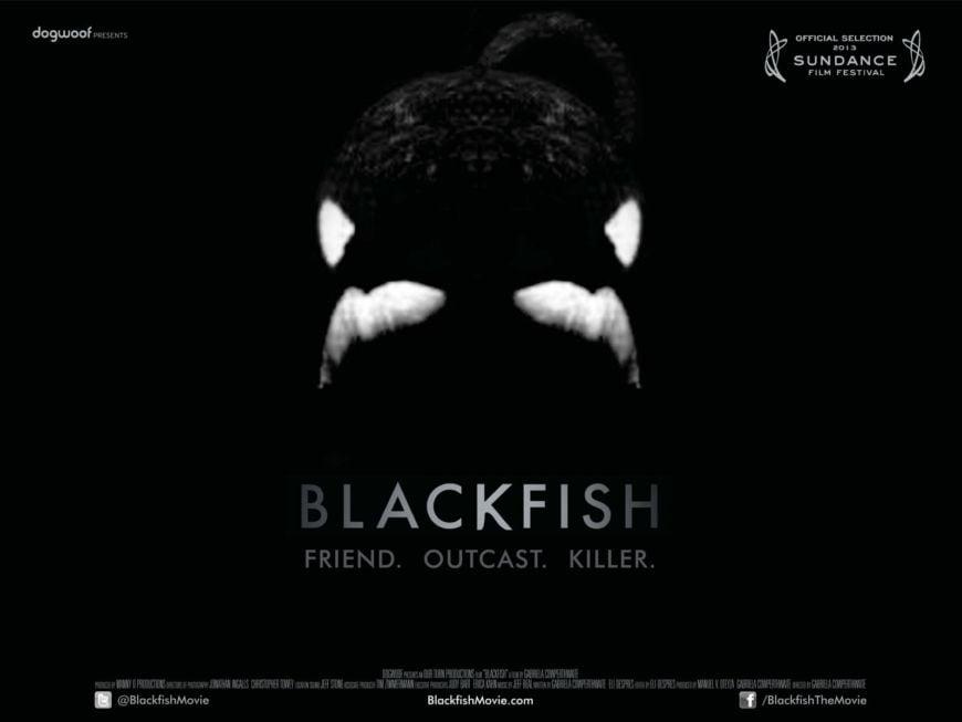 Dogwoof Documentary Blackfish Quad New 1600 1200 85