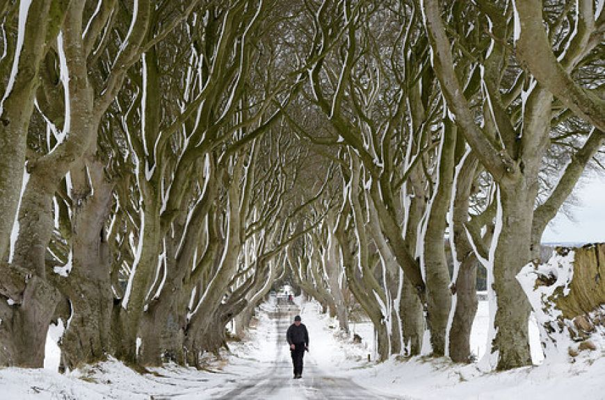 The-Dark-Hedges-Co.-Antrim1