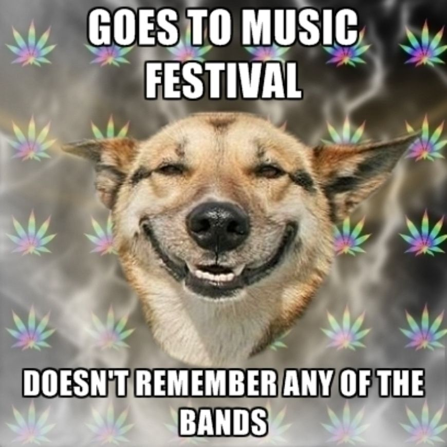 goes-to-music-festival-doesnt-remember-any-of-the-bands