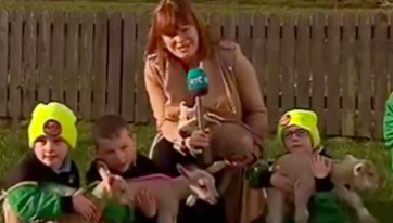 People fell in love with these lamb quadruplets on the RTE News last night
