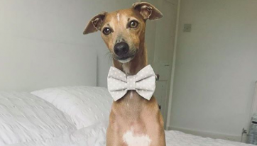 This Dublin Business Is Selling Adorable Dog Accessories For Your Pooch