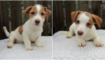 The ISPCA Is Seeking Permanent Homes For 17 Puppies