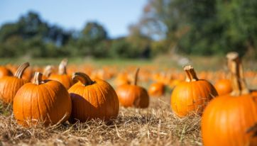 You Can Pick Your Own Pumpkin At This Pumpkin Patch In Meath