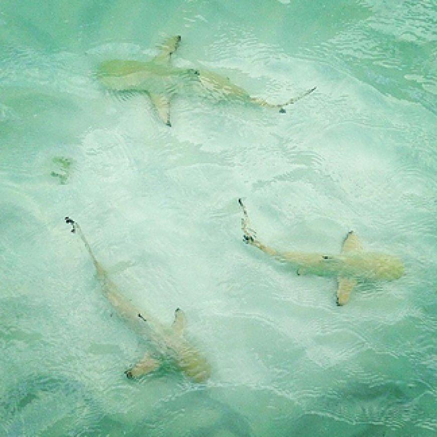 Cocoa-Island-in-The-Maldives-Islands3