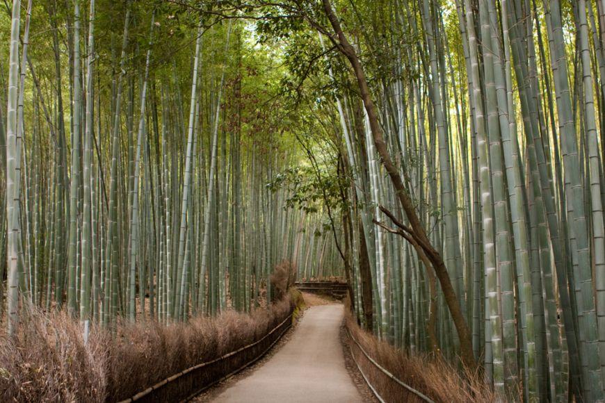 Bamboo-groves-of-Arashiyama-in-Kyoto-Japan