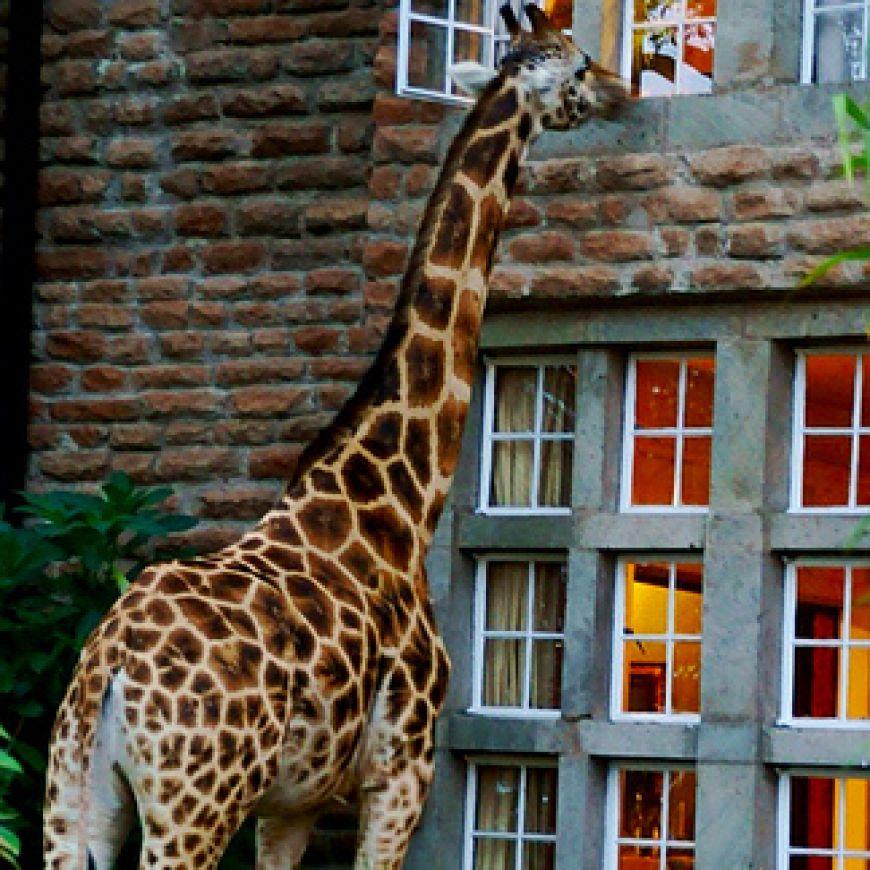 Giraffe-Manor-in-Nairobi-Kenya2