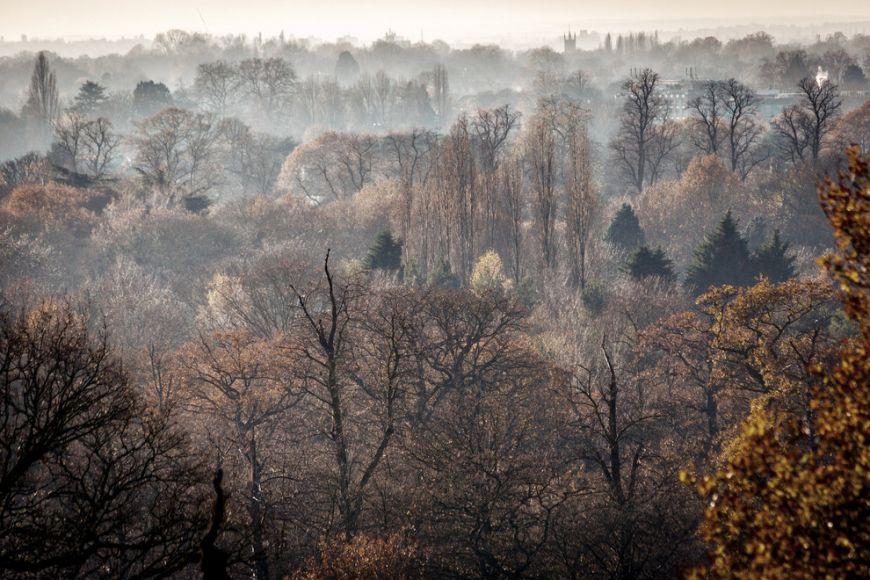 Richmond-Park1