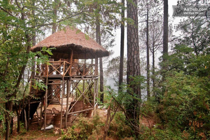 Tree-House-Shimla