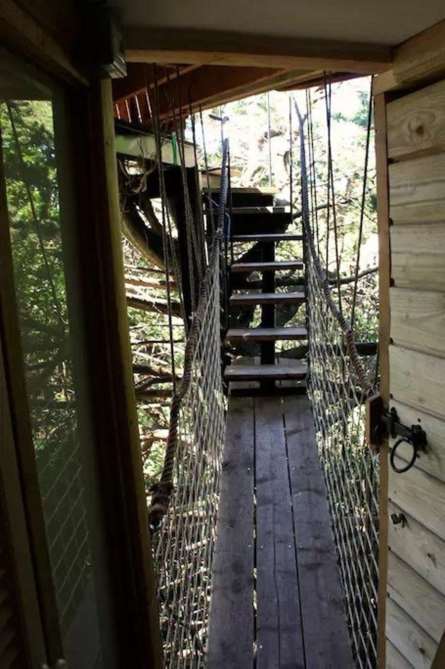 Treehouse Cork 3