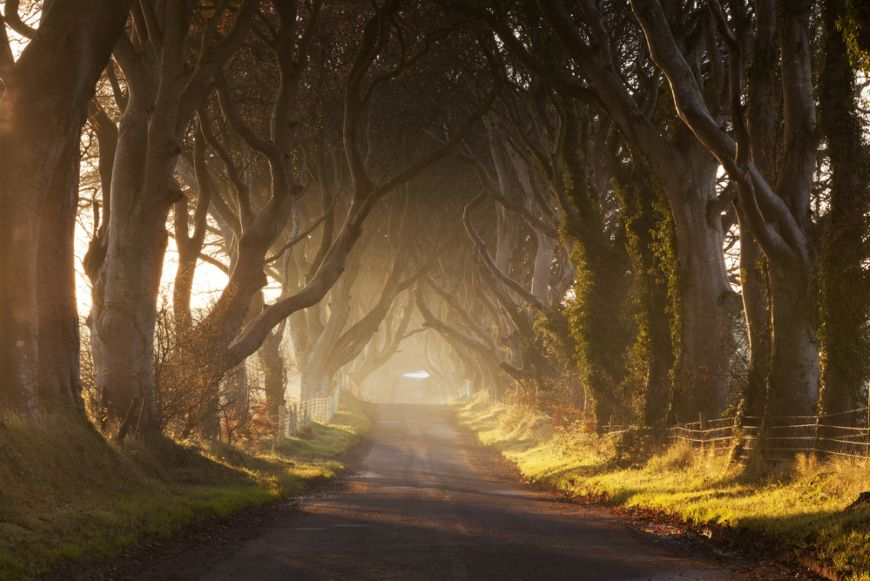 Dark Hedges Misty