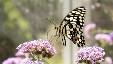 This Butterfly Garden Is One Of Dublin's Hidden Gems