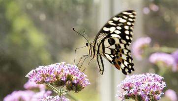 This Butterfly Garden Is One Of Dublin's Hidden Gems