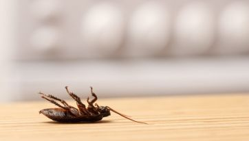 Cockroaches in kitchen the reason for closure of Dublin restaurant last month