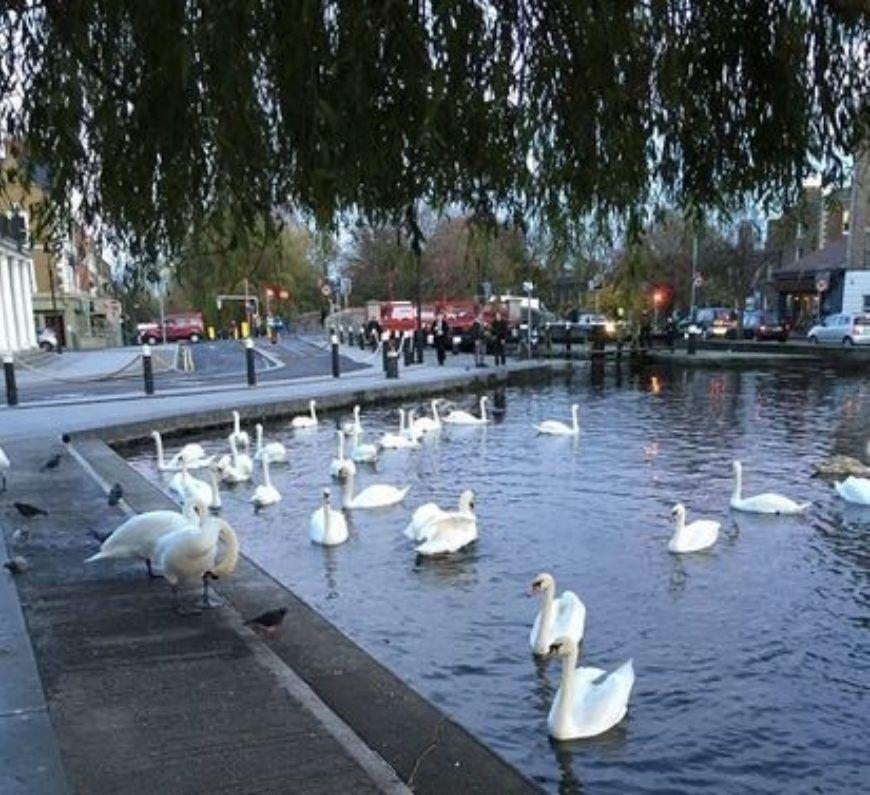 Swans-Portobello