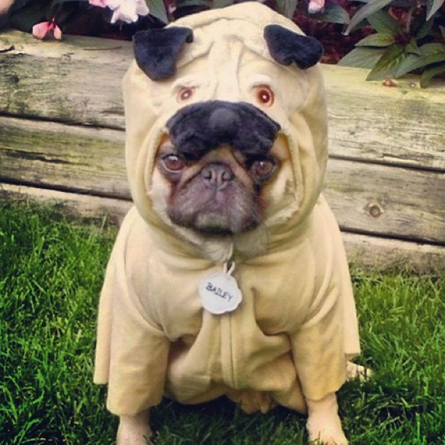 dog-onesie