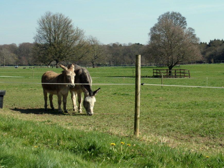 9-Donkeys