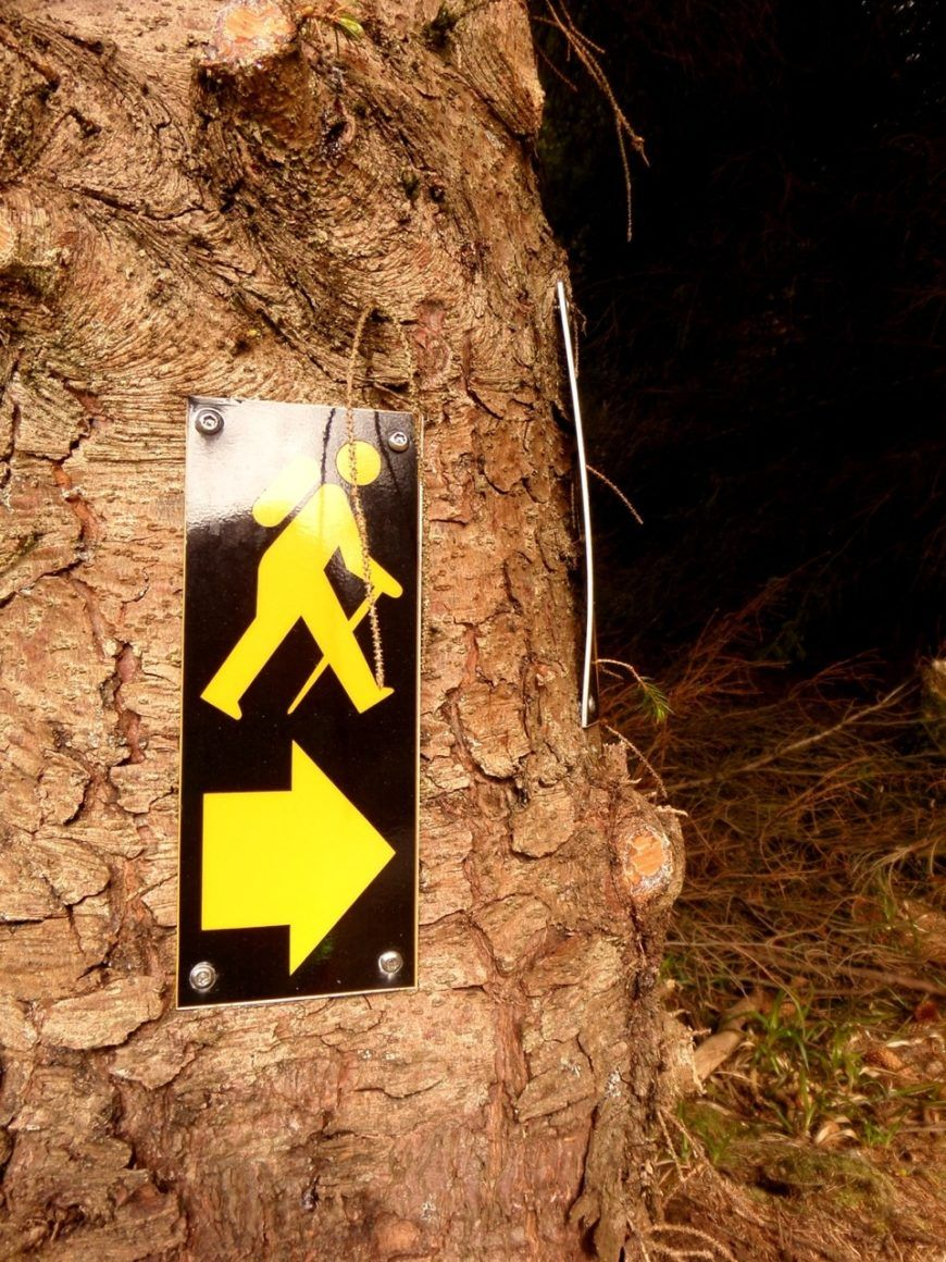 Pic-7-Tree-Sign