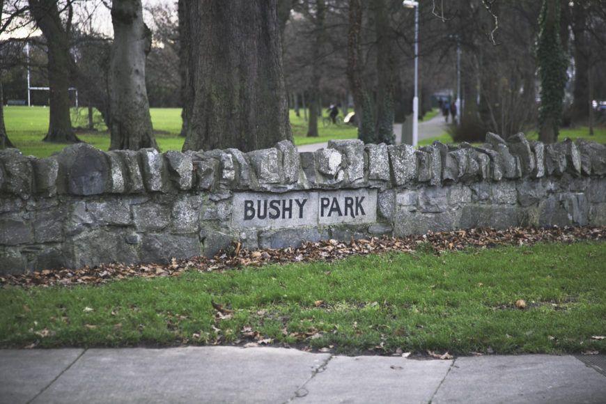 Bushy-Park-23