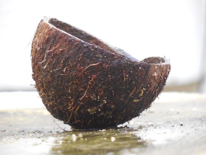 A cut coconut shell