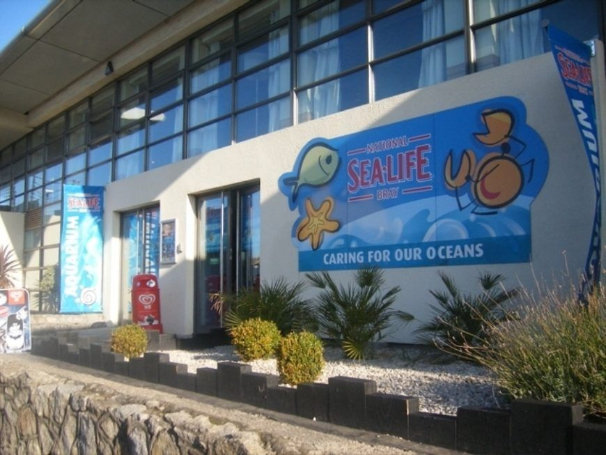 Sealife Bray is one of the best activities for kids slightly outside of Dublin