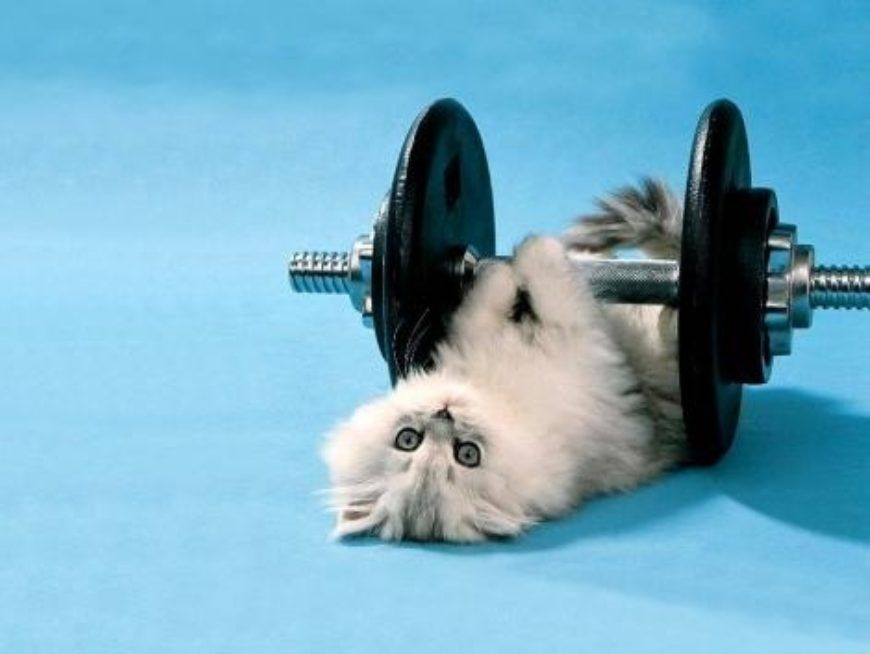 kittenliftingweights