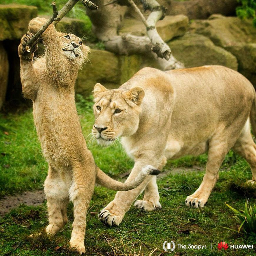 Huawei-Snapys-Winner-Animals